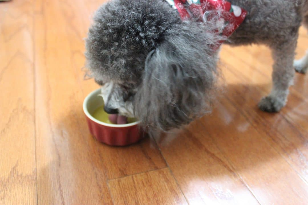 Dognog…Eggnog For Your Fur Baby