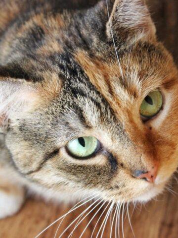 Gabby Cat - Simply LaKita
